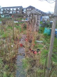 Allotment - under the grass we have raspberries